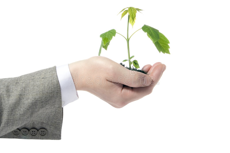 Download Green plant in hand stock image. Image of farmer, background - 2397249