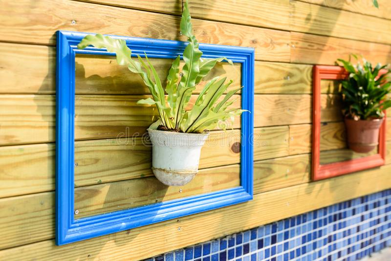 Green plant hanging in the middle of colorful painted photo frame on pallet wall royalty free stock image