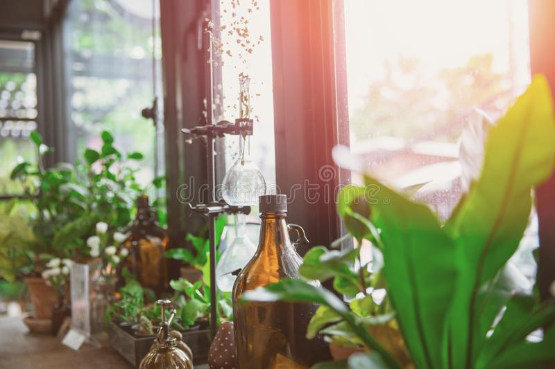 Green plant indoor cafe decoration with natural leaf and science instrument at the windows stock photo