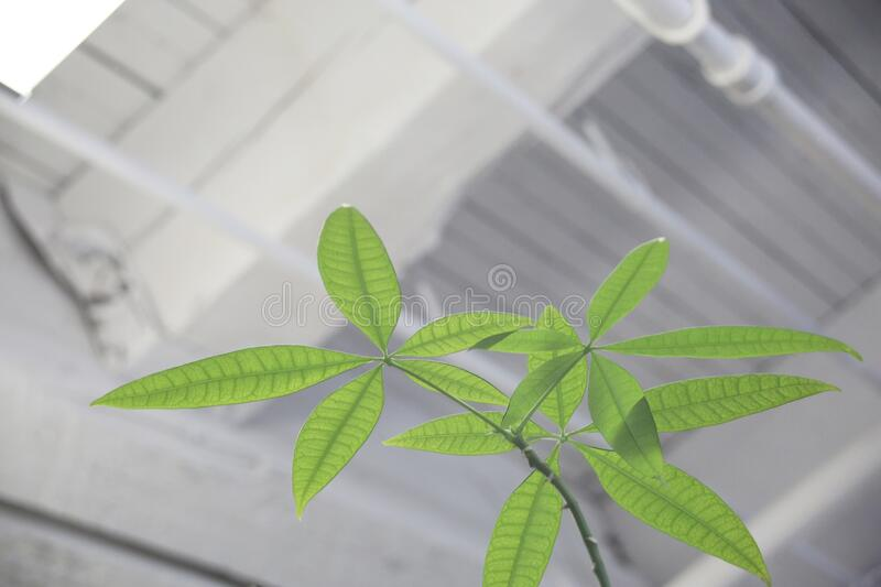 Green plant indoors stock photo