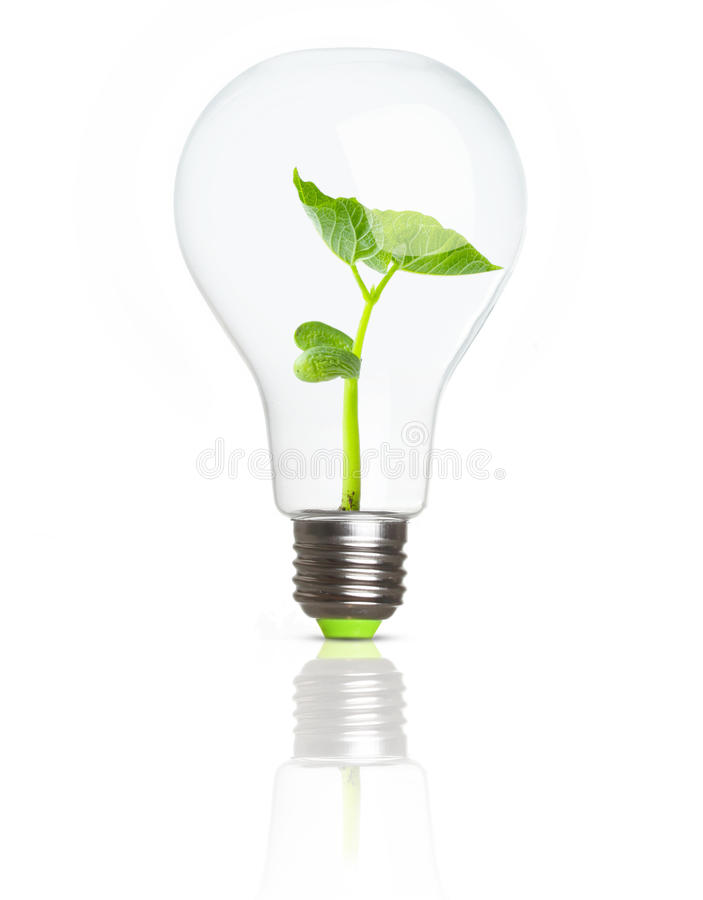 Green plant inside light bulb royalty free stock photos
