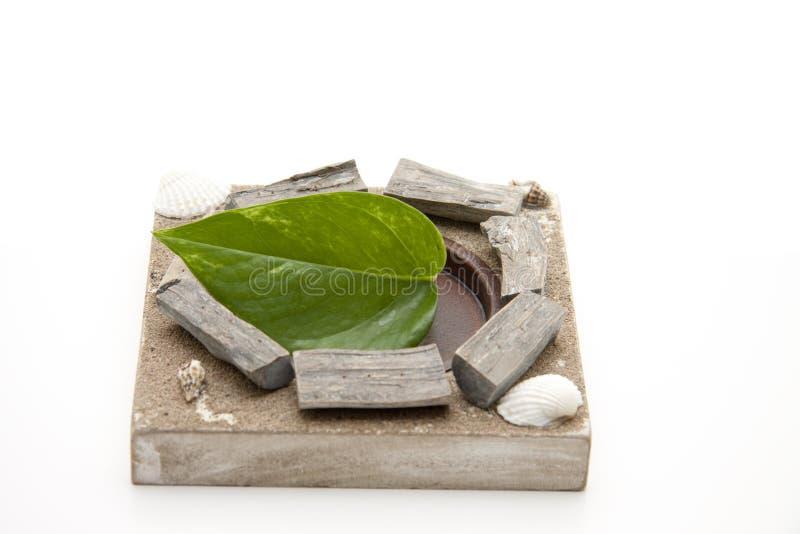 Green plant leaf stock image