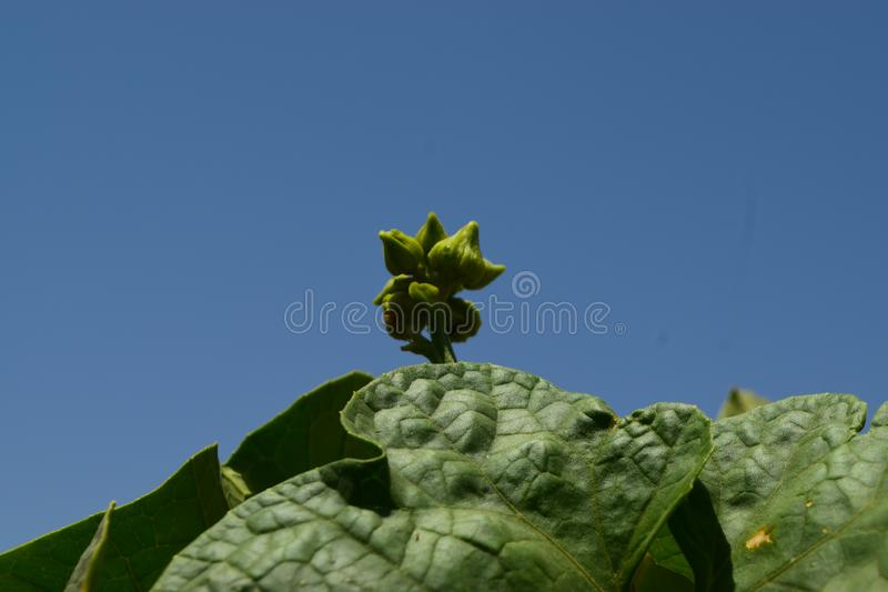 Green plant leaf and flower. Leaf and flower green plant close up blossom background nature stock photo