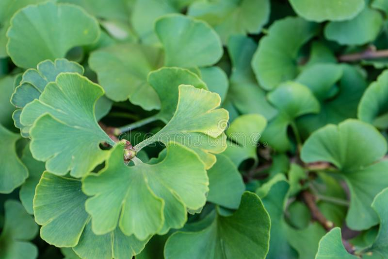 Green plant leaves leaf close up photo. Background design structure royalty free stock image