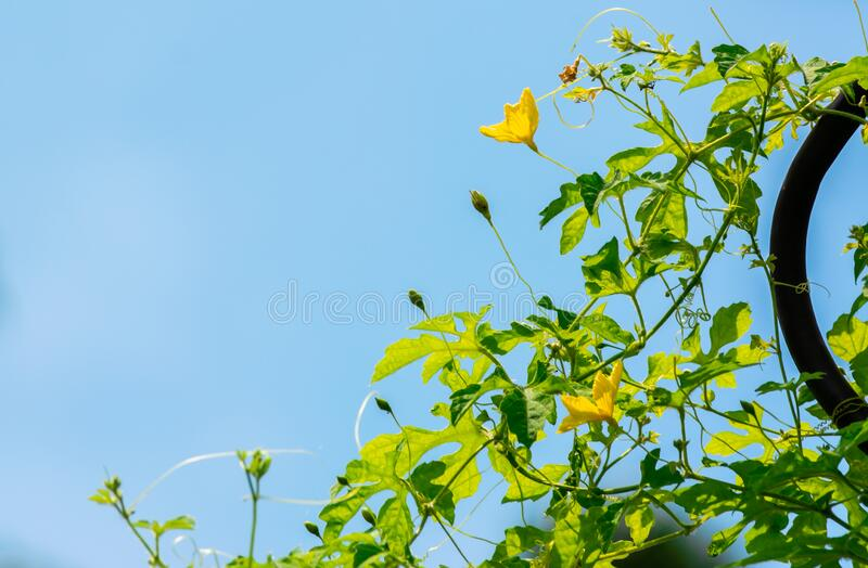 Green plant and little flower yellow color with blue sky on background royalty free stock image