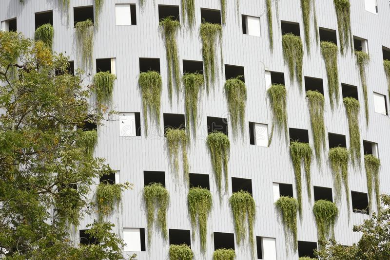 Green plant and modern building royalty free stock photography