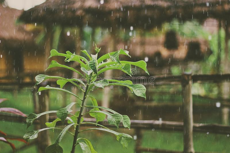 Green Plant Outdoors In The Rain Free Public Domain Cc0 Image