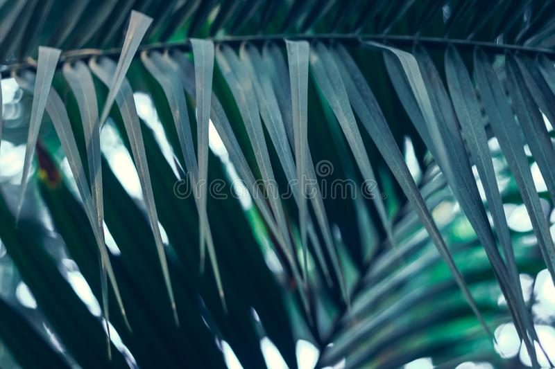 Green plant with palm leaves grow in forest. Nature. Background stock image