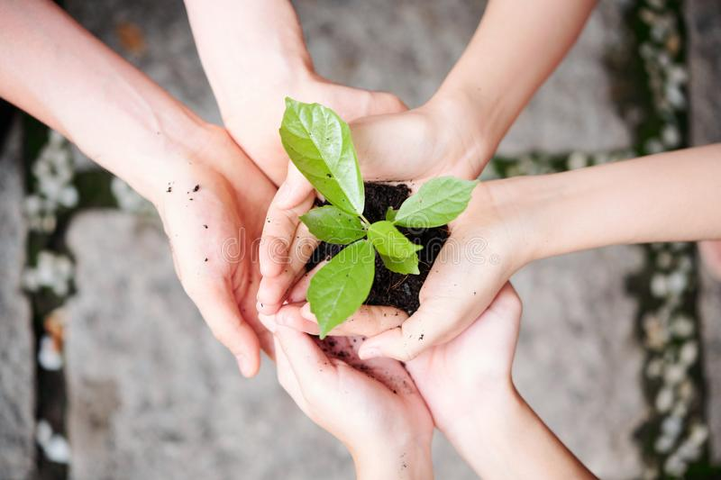 Green plant in people`s hands. Close-up of two people holding green plant with soil in their hands they care of environment royalty free stock image
