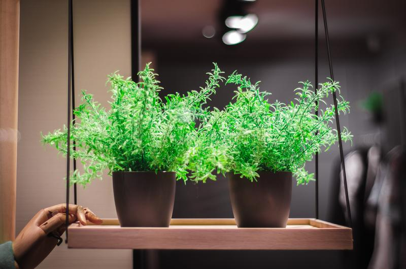 Green plant in a pot on a shelf royalty free stock images