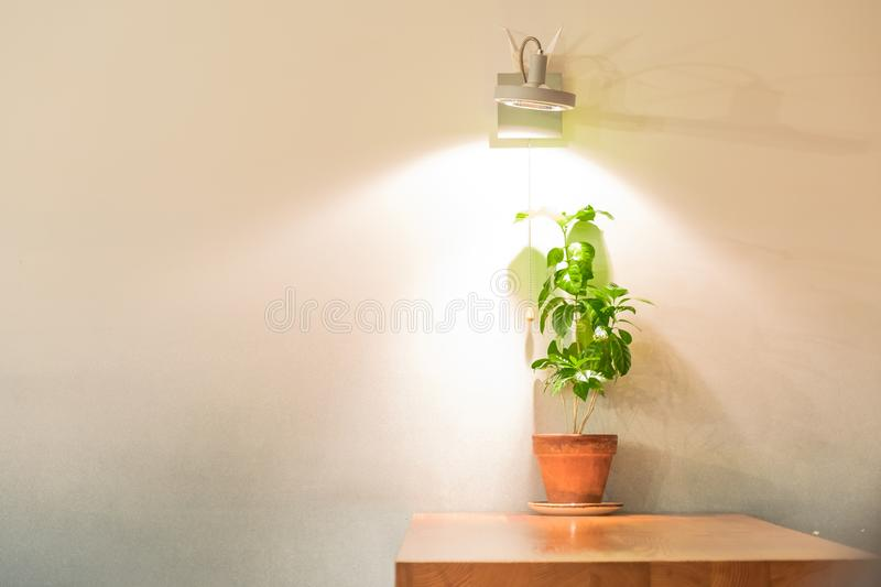 Green plant in pot on table under lamp light. Green plant in brown pot on table under lamp light royalty free stock images