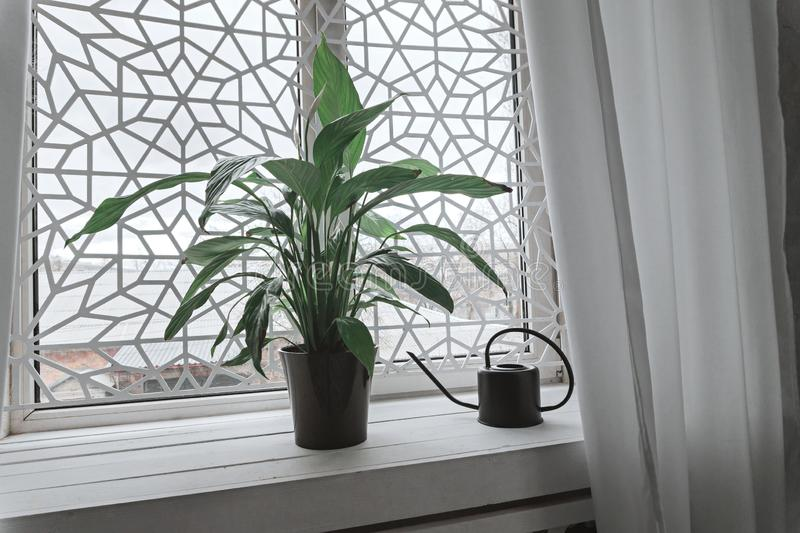 Green plant in pot and watering can on white window sill royalty free stock photo