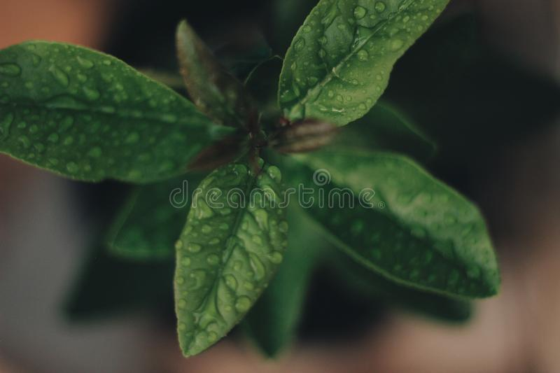 Green plant with raindrops royalty free stock image