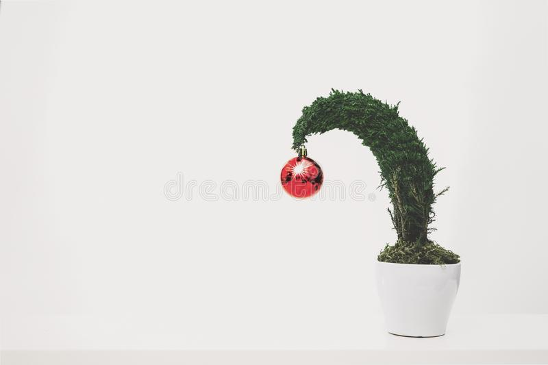 Green Plant With Red Ornament Planted in White Ceramic Pot stock image