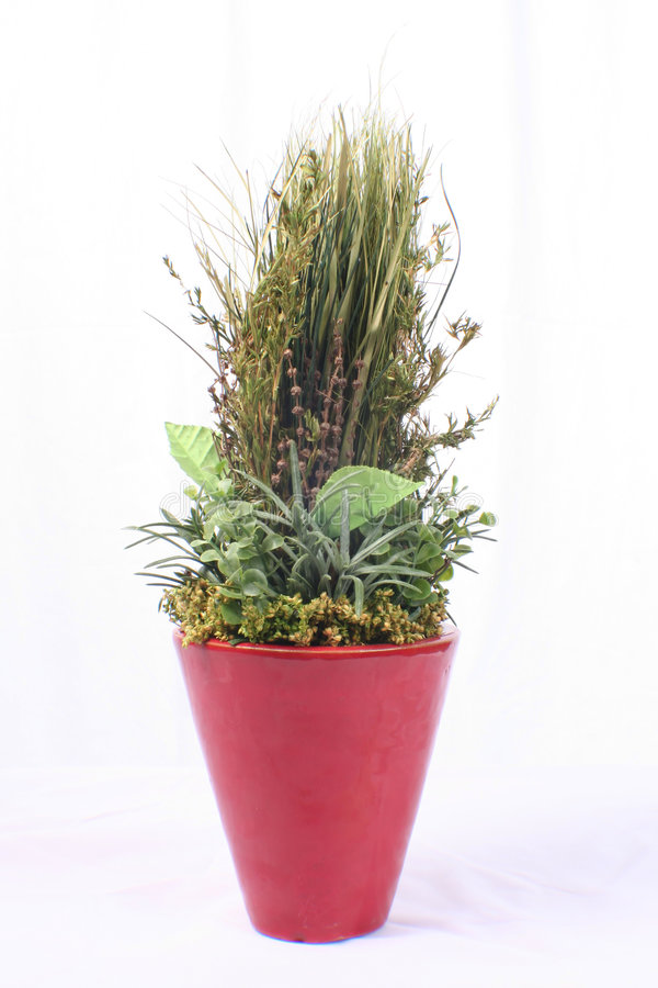 Green plant in red vase stock photos