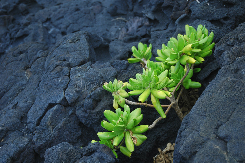 Green plant on rock stock images