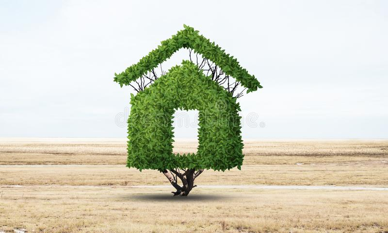 Green plant in shape of house grows at field. Eco friendly house concept. Nature landscape with dry grass and blue sky. Green building technology and stock photos