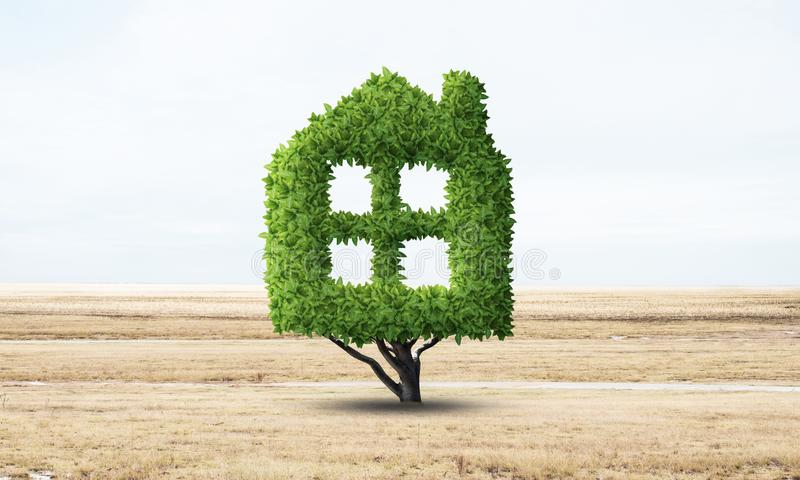 Green plant in shape of house grows at field. Eco friendly house concept. Nature landscape with dry grass and blue sky. Green building technology and royalty free stock photos