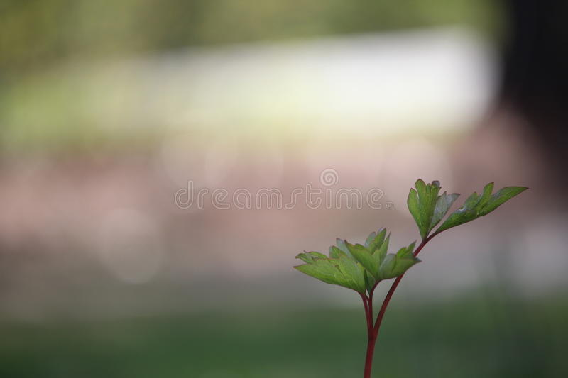 Green Plant stock images