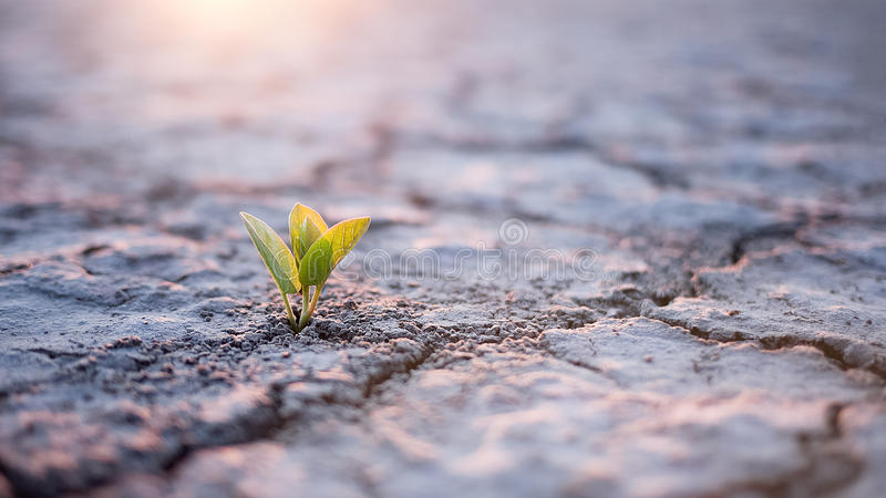 Green plant sprout in desert.  royalty free stock photos