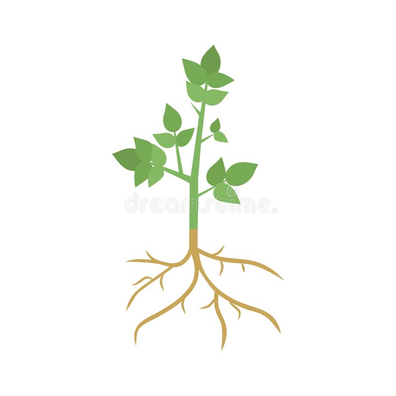 Green Plant Sprout with Roots stock illustration