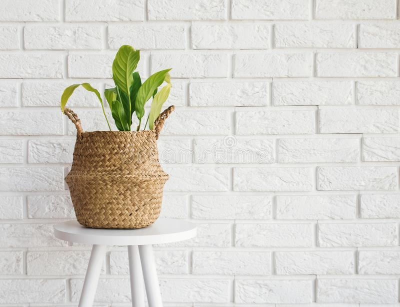 Green plant in a straw basket on the white brick wall background stock photo