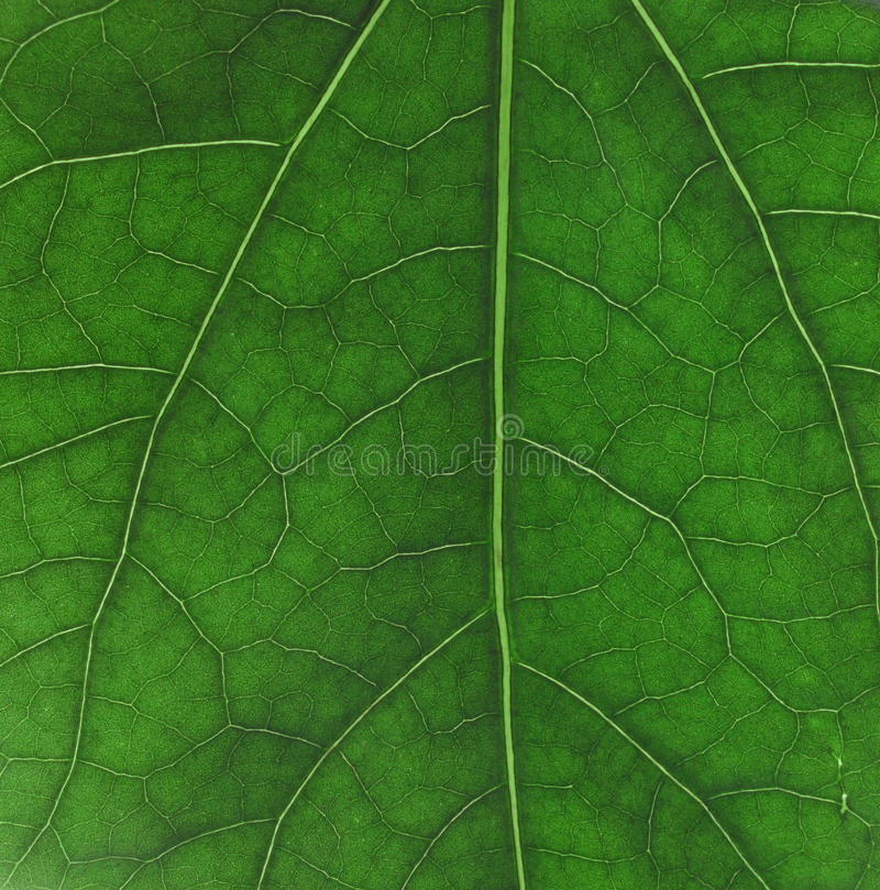 Green plant texture as background stock photo