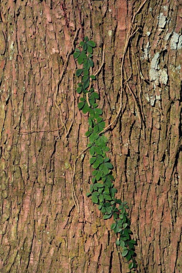 Green plant Texture stock photos