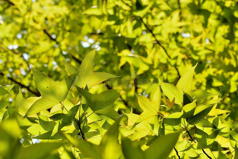 Green plant Texture stock images
