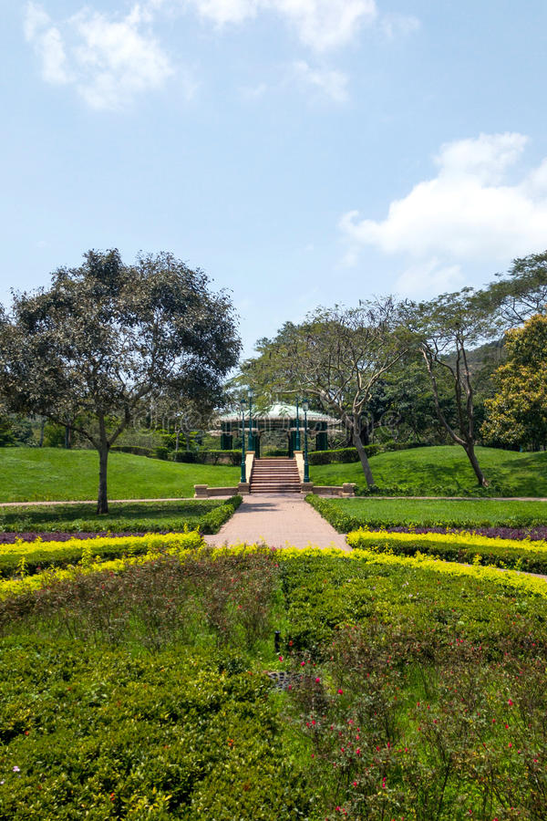 Green plant, tree, footpath in park at daytime. Green plant, tree, footpath in the park at daytime stock image