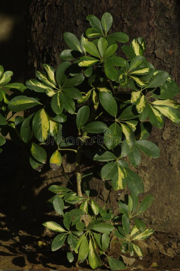 Green Plant By Tree Trunk Free Public Domain Cc0 Image