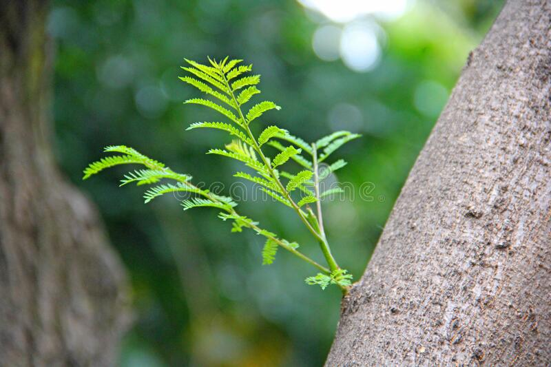 Green plant on tree trunk. N stock photos