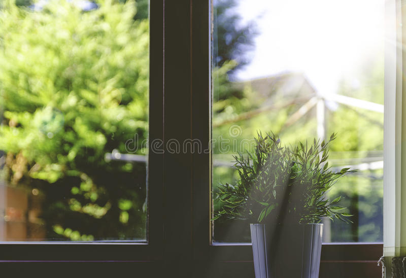 Green Plant On White Flower Pot Near The Window Free Public Domain Cc0 Image