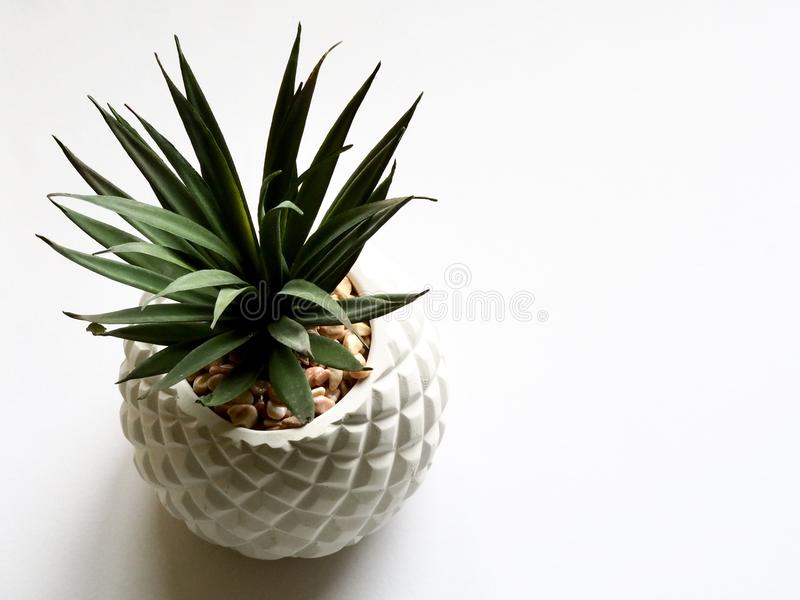 Green Plant on White Vase stock image