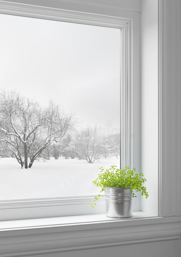 Green plant and winter landscape seen through the window stock photography