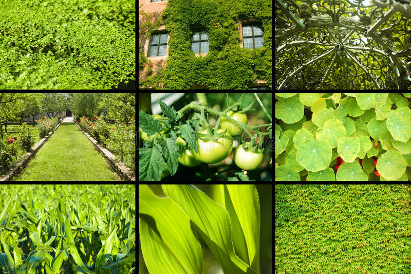 Green Plants Stock Photos