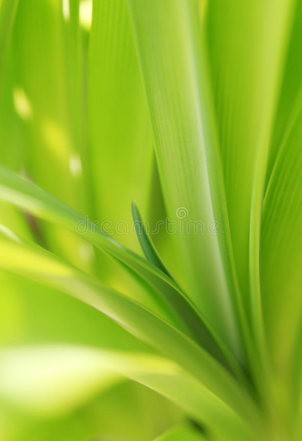 Download Green plants stock photo. Image of view, flora, foliage - 34947664