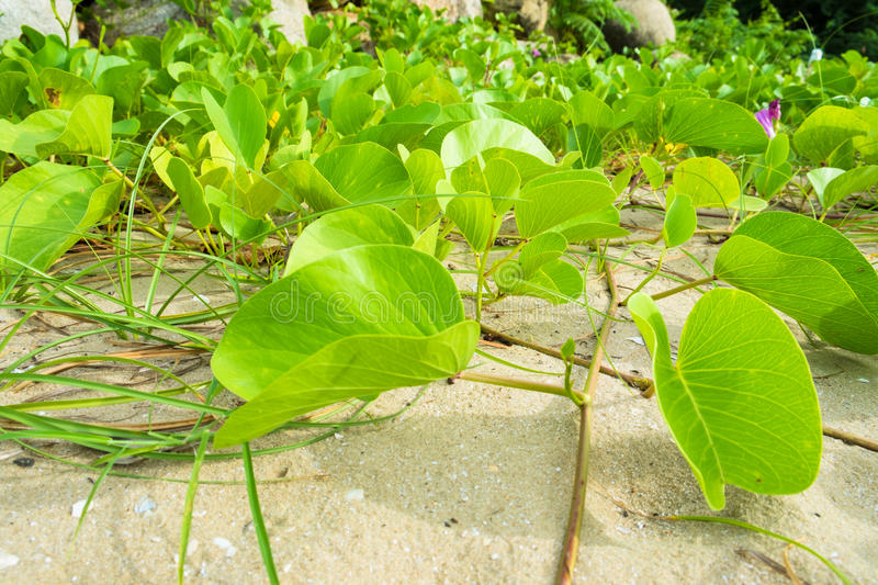 Green plants royalty free stock image