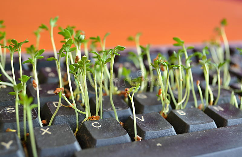 Green plants between black keys in a computer keyboard royalty free stock photos