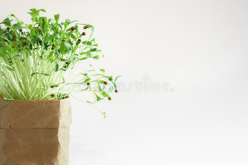 Green plant new spouts eco royalty free stock image