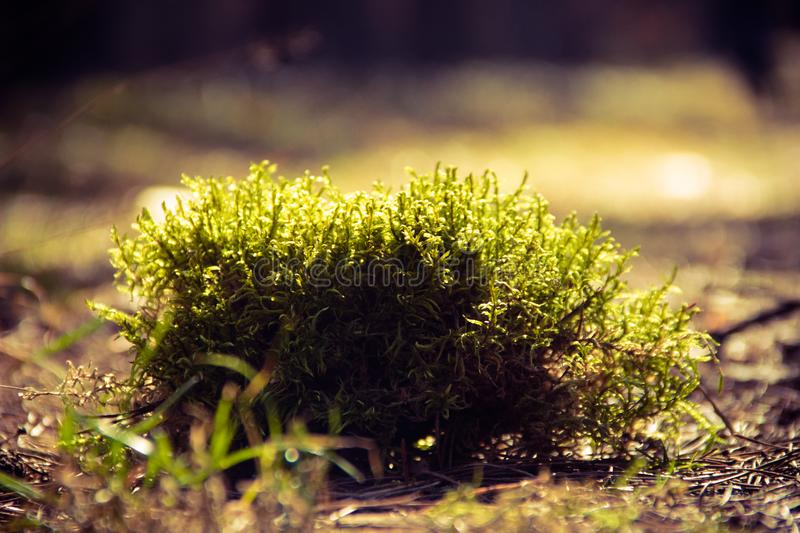 Green Plants on Brown Surface stock image