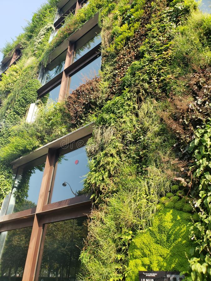 Green plants on building stock image