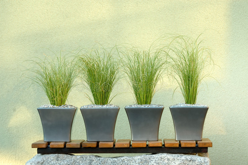 Green plants composition royalty free stock image