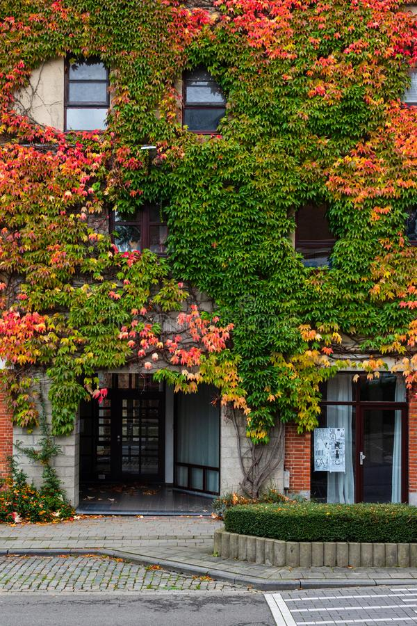 Green plants covered walls in a city house and public road. Autumn colors. stock photography