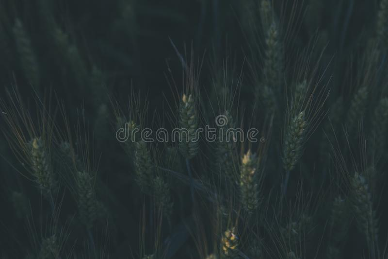 Green Plants at Daytime royalty free stock photos