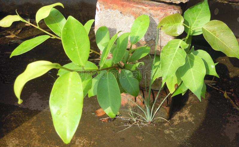 The Green Plants manage to grown on the roof of a house in hot summer on cement and concrete. royalty free stock images