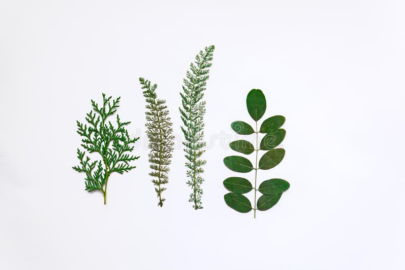 Four green leaves of various plants on a white background stock images