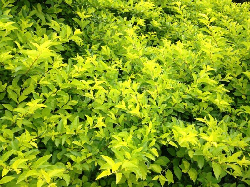 Green plants stock image