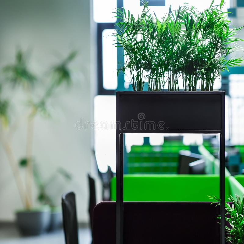 Green plants in modern open space office for freelancer stock images
