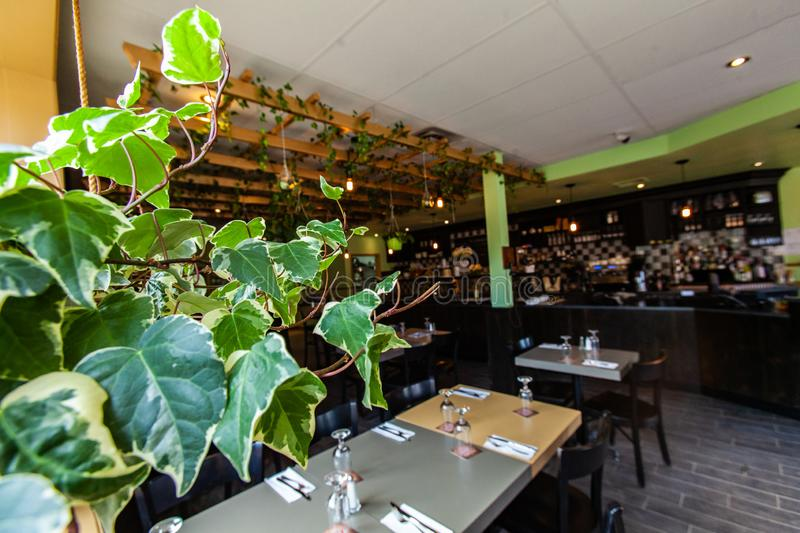 Green plants in modern restaurant. A closeup view of healthy green ivy leaves at the entrance to an environmentally friendly cafe, empty tables are seen in royalty free stock images